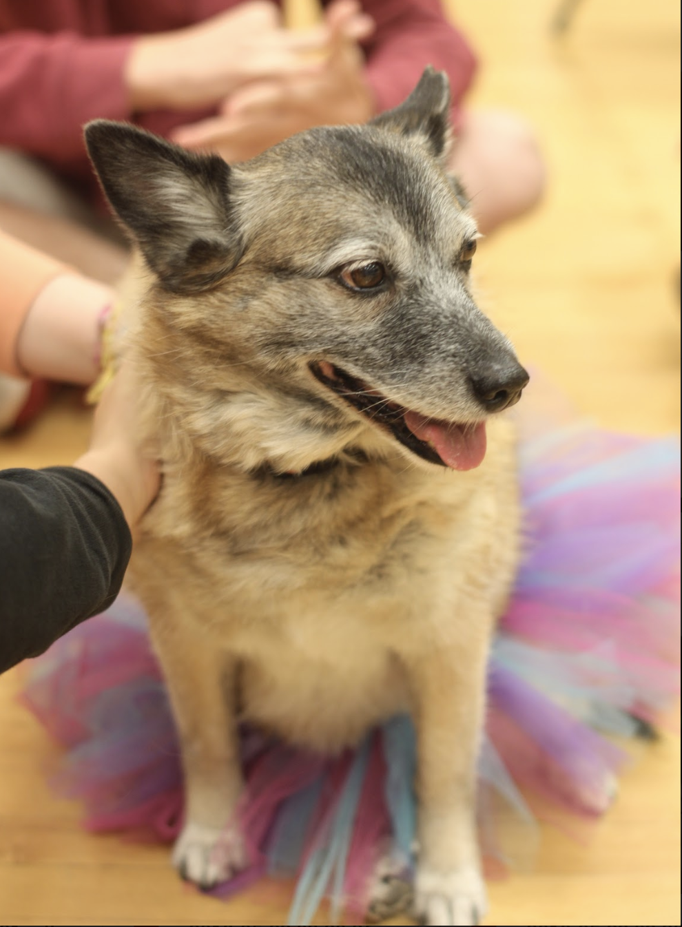 Students pet a PAL dog in the dance studio as a part of mental health week.
