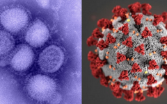 The swine flu pandemic occurred between Jan. 2009 and Aug. 2010. The COVID-19 pandemic began in Dec. 2019.